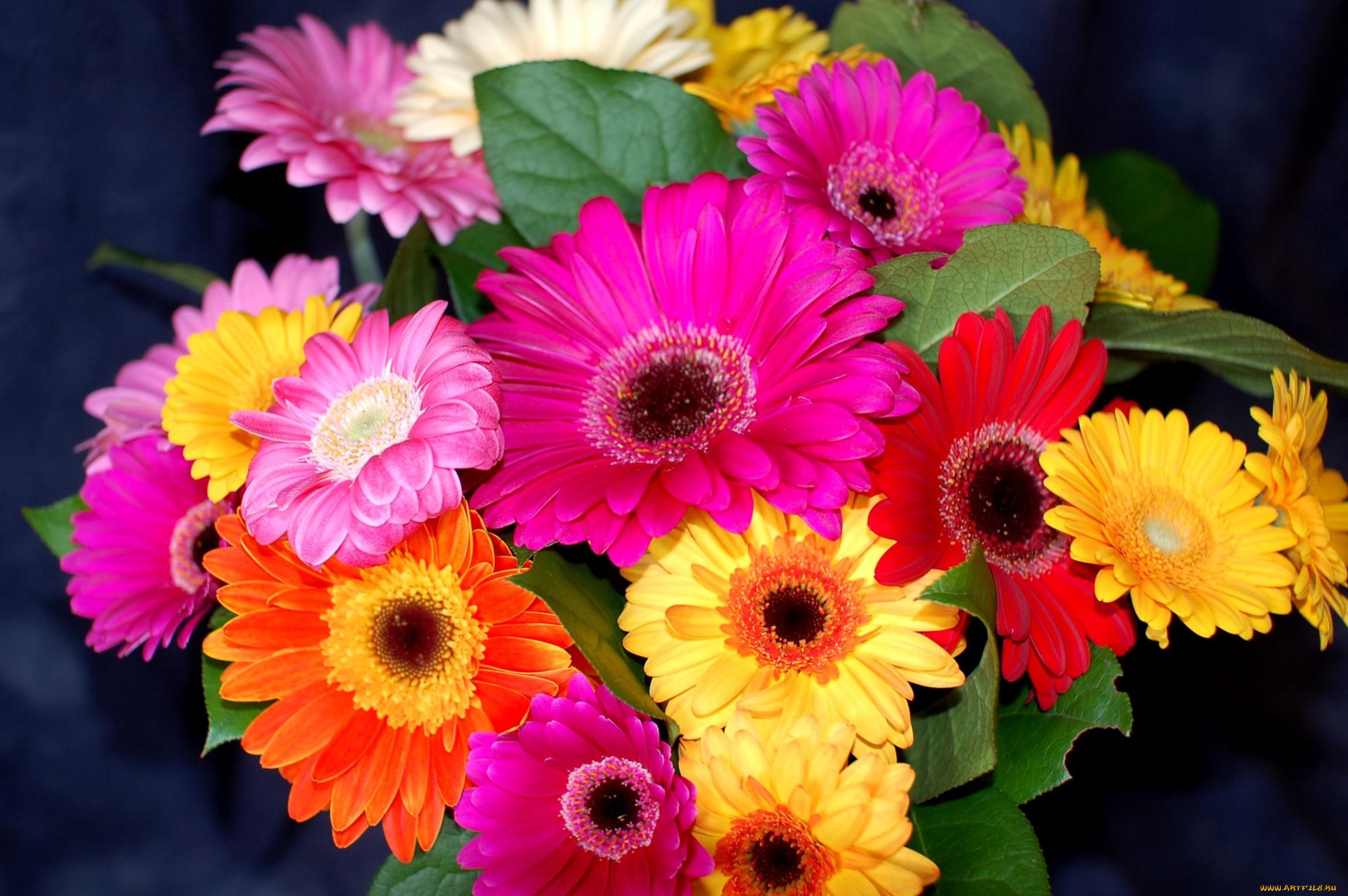 Букеты цветов обои для рабочего стола